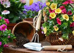 How to Garden safely without hurting your back, knees or joints